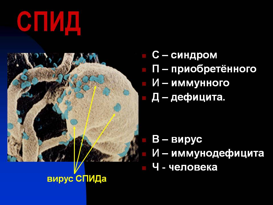 Реферат ВИЧ инфекция Сообщение по биологии на тему вич